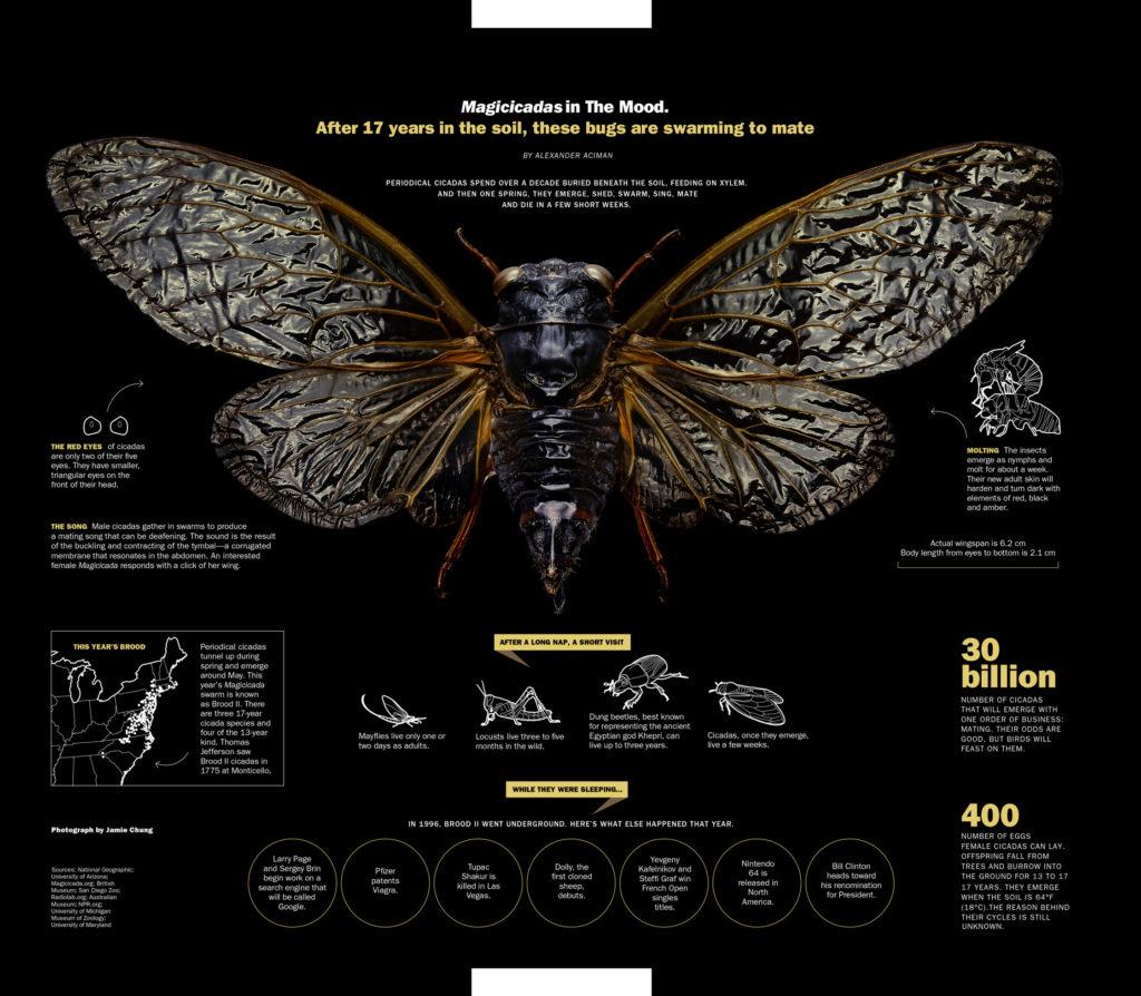 Cicada.Final
